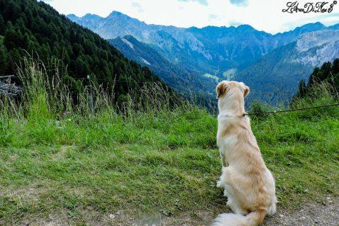 Viaggio in camper Val Di Fassa: una valle in 13 giorni