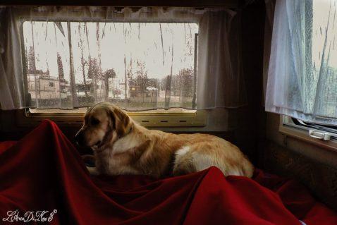 Il camper ideale per viaggiare con il cane