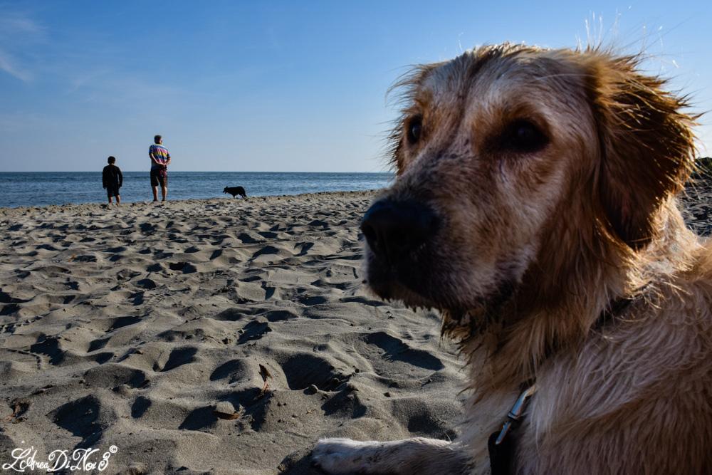 Lido di Volano spiaggia cane