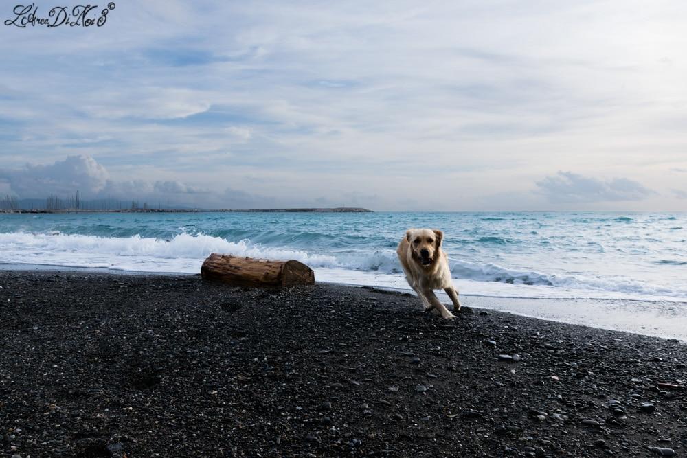 Cecina Le Gorette corse cane in spiaggia