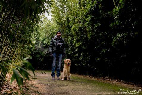 Trainati fuori dal labirinto: lo stress da guinzaglio quando è il cane a portare in giro il padrone