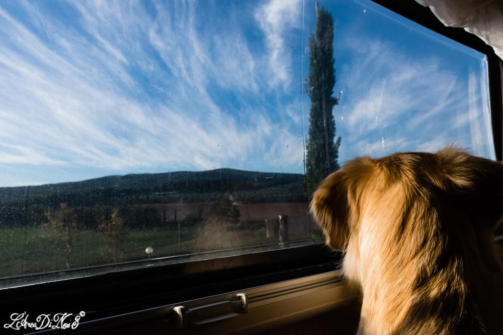 Monteriggioni cane camper