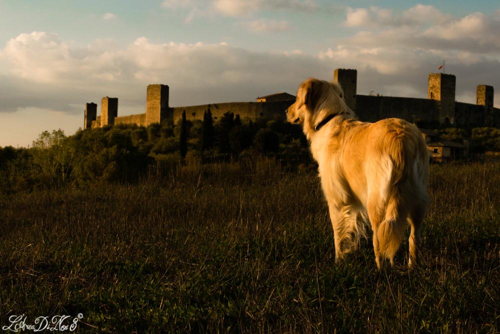 Monteriggioni cane
