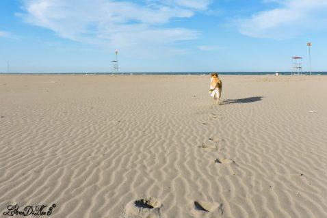 Correre col cane su una spiaggia deserta: benessere per zampe e piedi