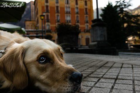 Quando i padroni vanno alle terme, i cani sognano