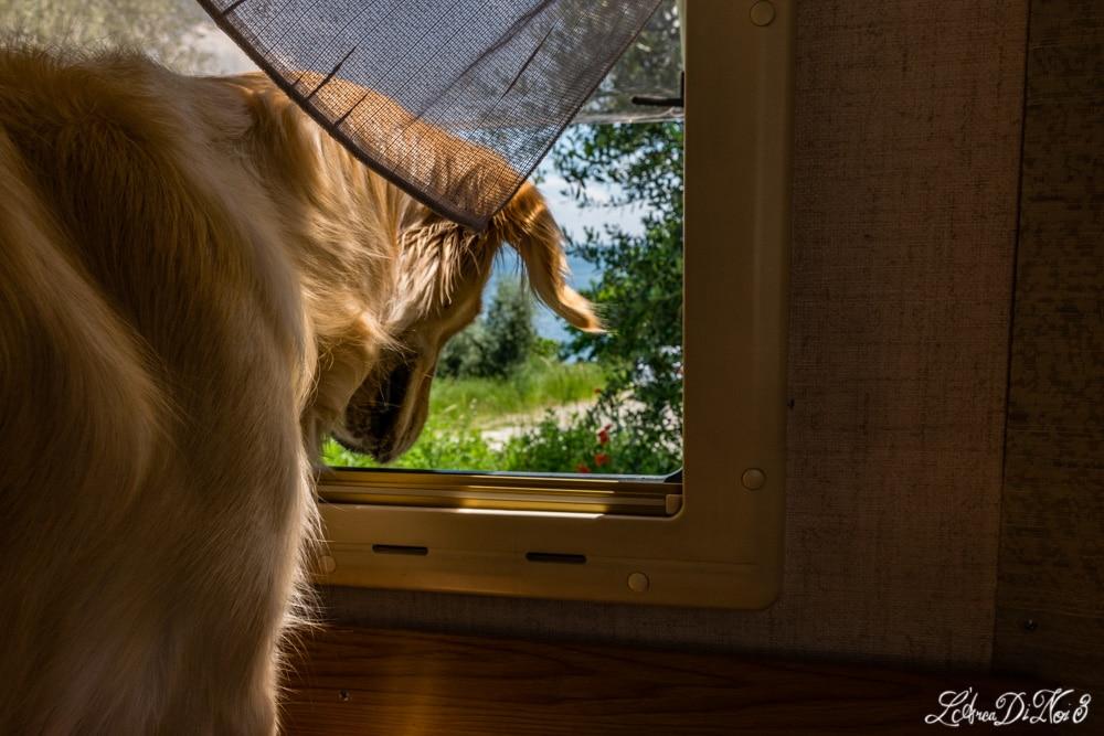 Manerba del Garda cane in camper