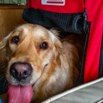 Viaggiare con un cane in camper: come comportarsi? La nostra esperienza