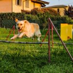 Attività da fare con il proprio cane: l'agility dog secondo Fido