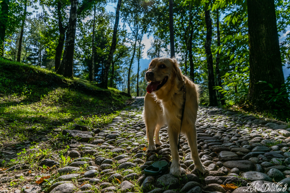 Capo di Ponte cani ammessi