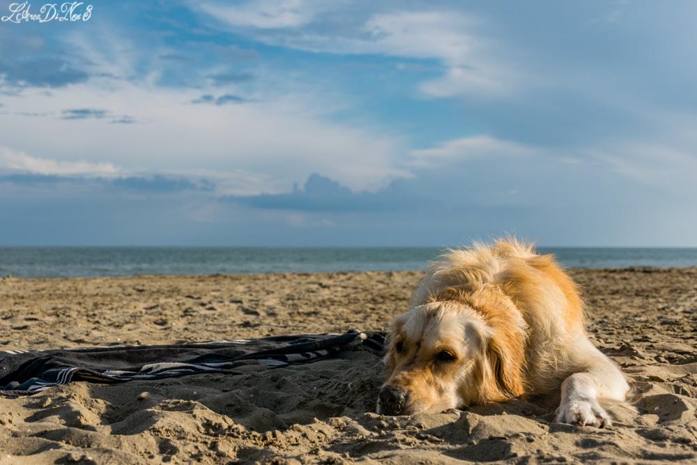 Cavallino Treporti dog beach