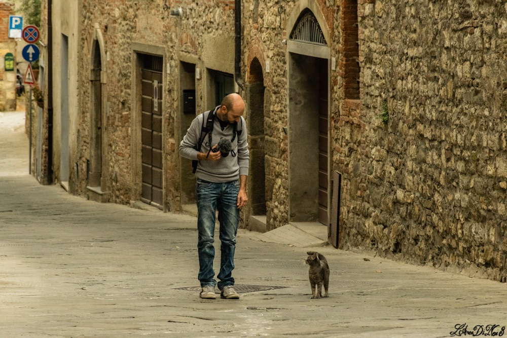 Lucignano gatto