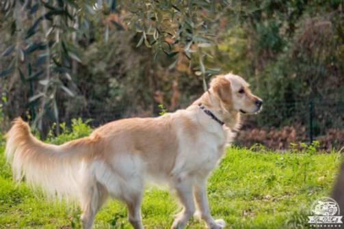 San Terenzo Lerici area cani