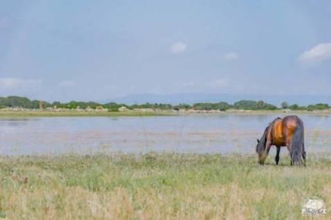 Altopiano della Giara in camper: la vera natura selvaggia della Sardegna