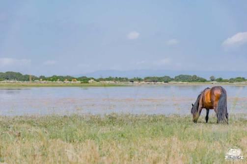 Altopiano della Giara cavalli selvaggi