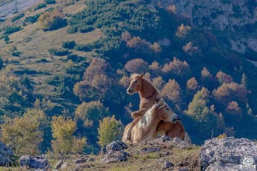 Valcanale alpeggio alpe Neel cavalli